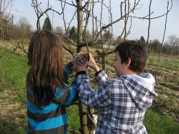 Učenici su sami izradili i postavili staništa za korisne kukce