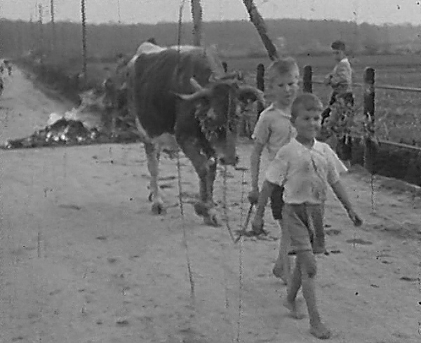 djeca-krave-jurjevo-arhaicno-prelaz-preko-krijesa