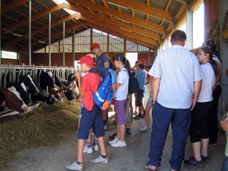 Na farmi muznih krava