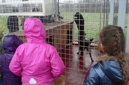 Posjetili su i azil za pse Dumovec