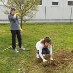 Sedmaši sadili voćke